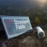 Strawberry Fields - Medical